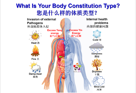 Body Constitution Types And Right Food Diet Facts