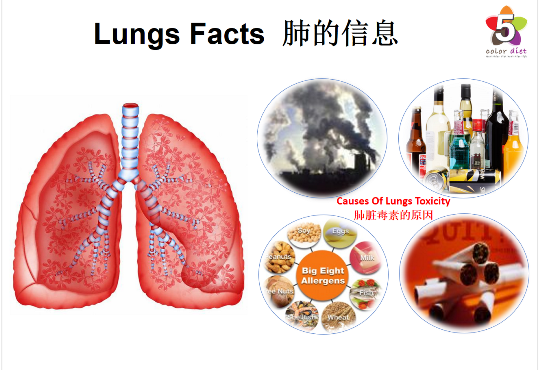 Lungs Facts