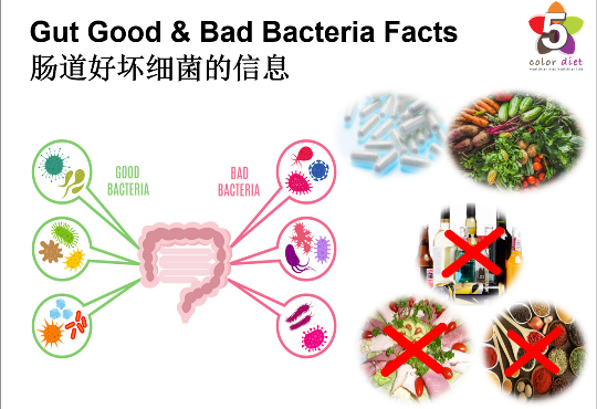 Gut Good & Bad Bacteria Facts
